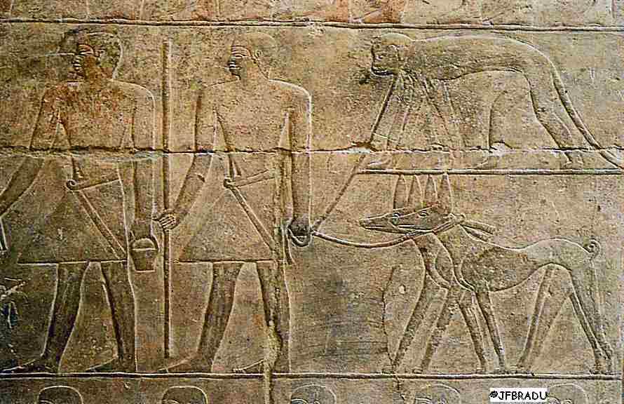 """Résultat de recherche d'images pour """"lévrier egyptien hiéroglyphe"""""""